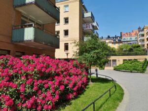 Branschvalidering utemiljö yttre fastighetsskötsel